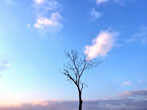 @wortagent Baum