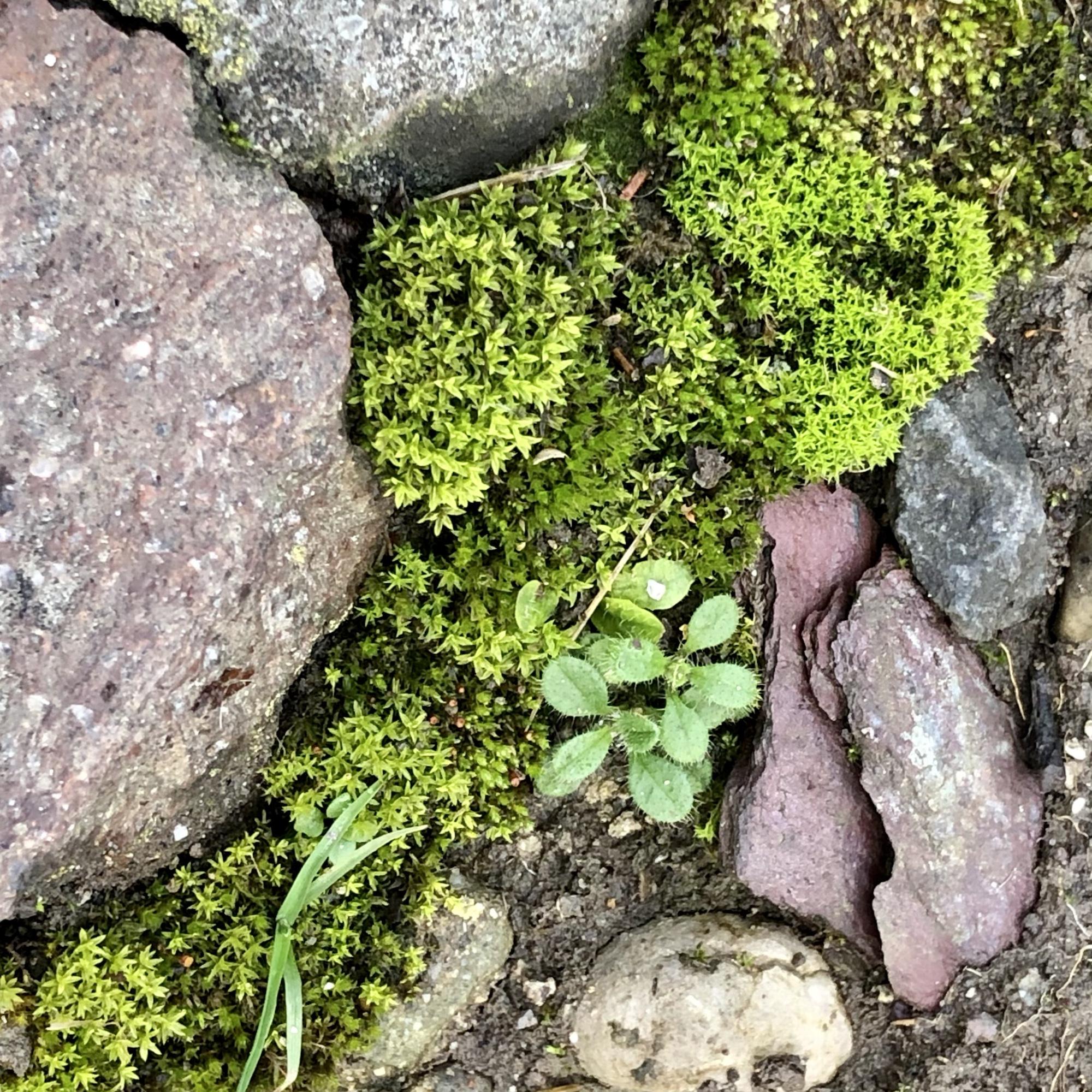 Boden von oben. Steine in rot und hell und dunkelgrau mit Moos, einem Gras und einer kleinen Pflanze mit erst wenigen Blättern.