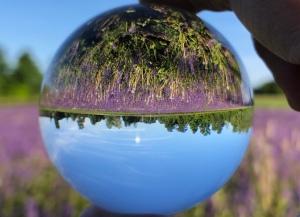 Glaskugel stellt den hellblauen Himmel, den Wald und das violette Blumenfeld auf den Kopf.